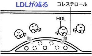 HDLコレステロールが血液中に減ると